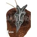 Alocasia sanderiana ssp nobilis