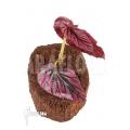 """Begonia brevirimosa subsp. Exotica 'Syn. Begonia Edinburgh' """"Starter"""""""