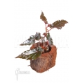 Begonia new Red Starter
