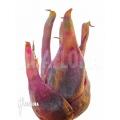 Bromelien 'Bromeliad species Duida'
