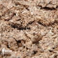 Dried spaghnum fine (0,5 kg)