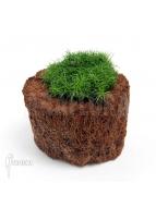 Album Terrariumpflanzen
