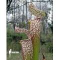 Schlauchpflanzen ´Sarracenia leucophylla (040024)'
