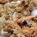 Spaghnum 1kg dried non pressed