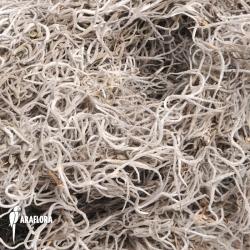 Spanish moss dried