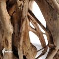 Strangler fig (Ficus watkinsiana)