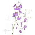 Wasserschlauch 'Utricularia longifolia'